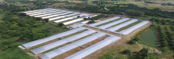 2012 : Investment of Breeder Farm Operation