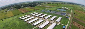 2012 : Investment of GGP Swine Business