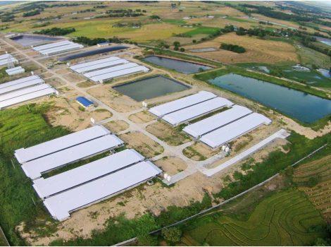 Swine PS Farm
