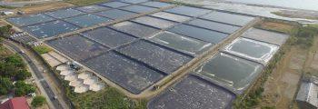 2013 : Zambales Shrimp Farm 3