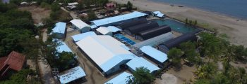 2007 : Started the business with Shrimp Hatchery Laboratory at Cebu