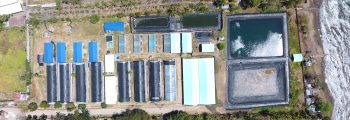 2009 : Investment and Start of Operation of Dumaguete Shrimp Laboratory Hatchery