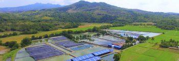2011 : Investment and Start of Operation of Pilar, Bataan Shrimp Laboratory Hatchery
