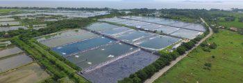 2009 : Investment and Start of Operation of Pulupandan Shrimp Farm