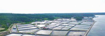2008 : Investment and Start of Operation of Calatagan Batangas Shrimp Farm