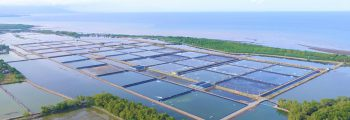 2015 : Investment and Start of Operation of Davao Shrimp Farm
